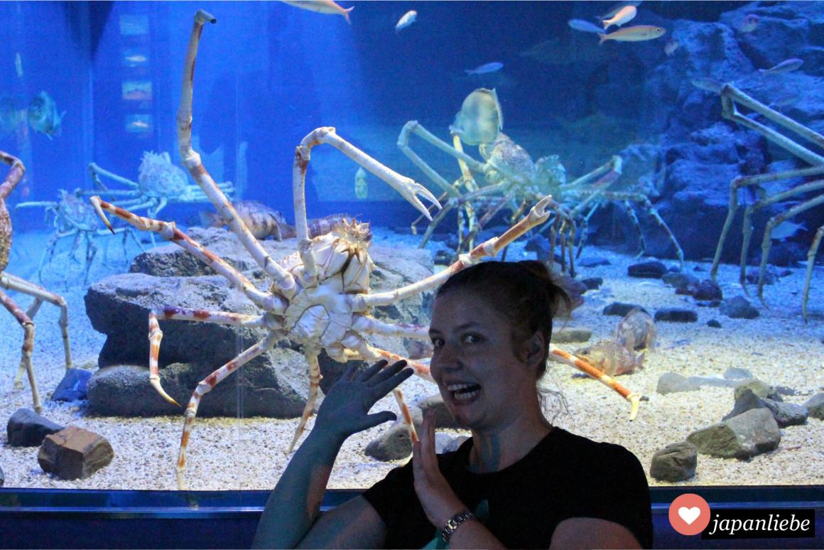 Im Aquarium in Osaka: Eine japanische Riesenkrabbe und ich