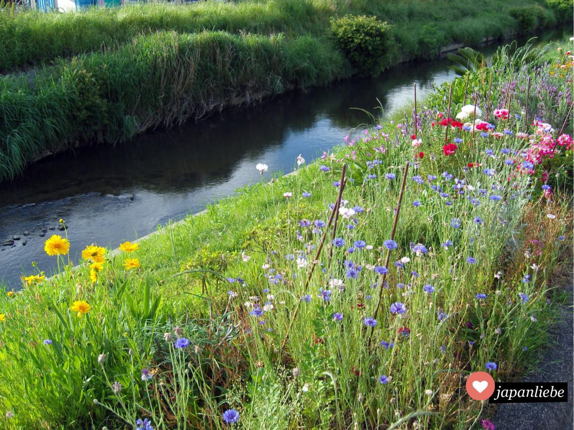 Japanische Kleinstadtidylle: Blumen am Flußufer in Okazaki, Präfektur Aichi