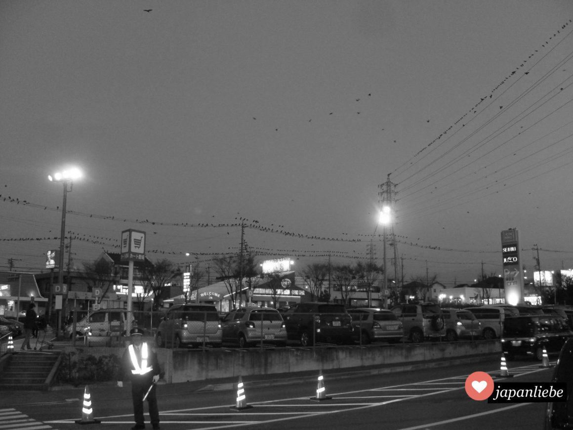 Das alltägliche Schauspiel am Parkplatz der Aeon Mall in Okazaki: Hunderte Krähen sammeln sich.
