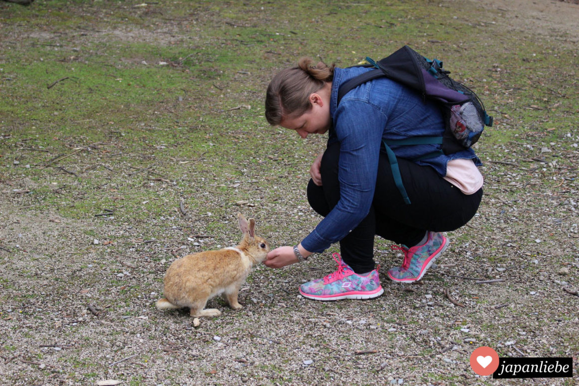 Ich füttere auf der Hasen-Isnel Okunoshima ein Kaninchen
