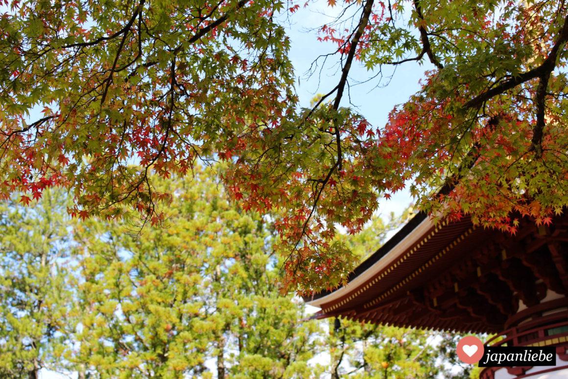 Eine Pagode auf dem Koya-san mit erstem Herbstlaub im Oktober.