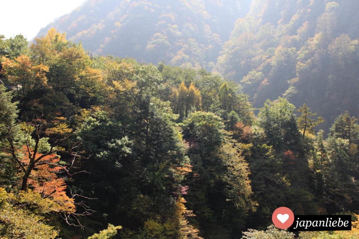 Sobald das Laub der Bäume sich komplett herbstlich gefärbt hat, kann man sich vor Touristen kaum noch retten.