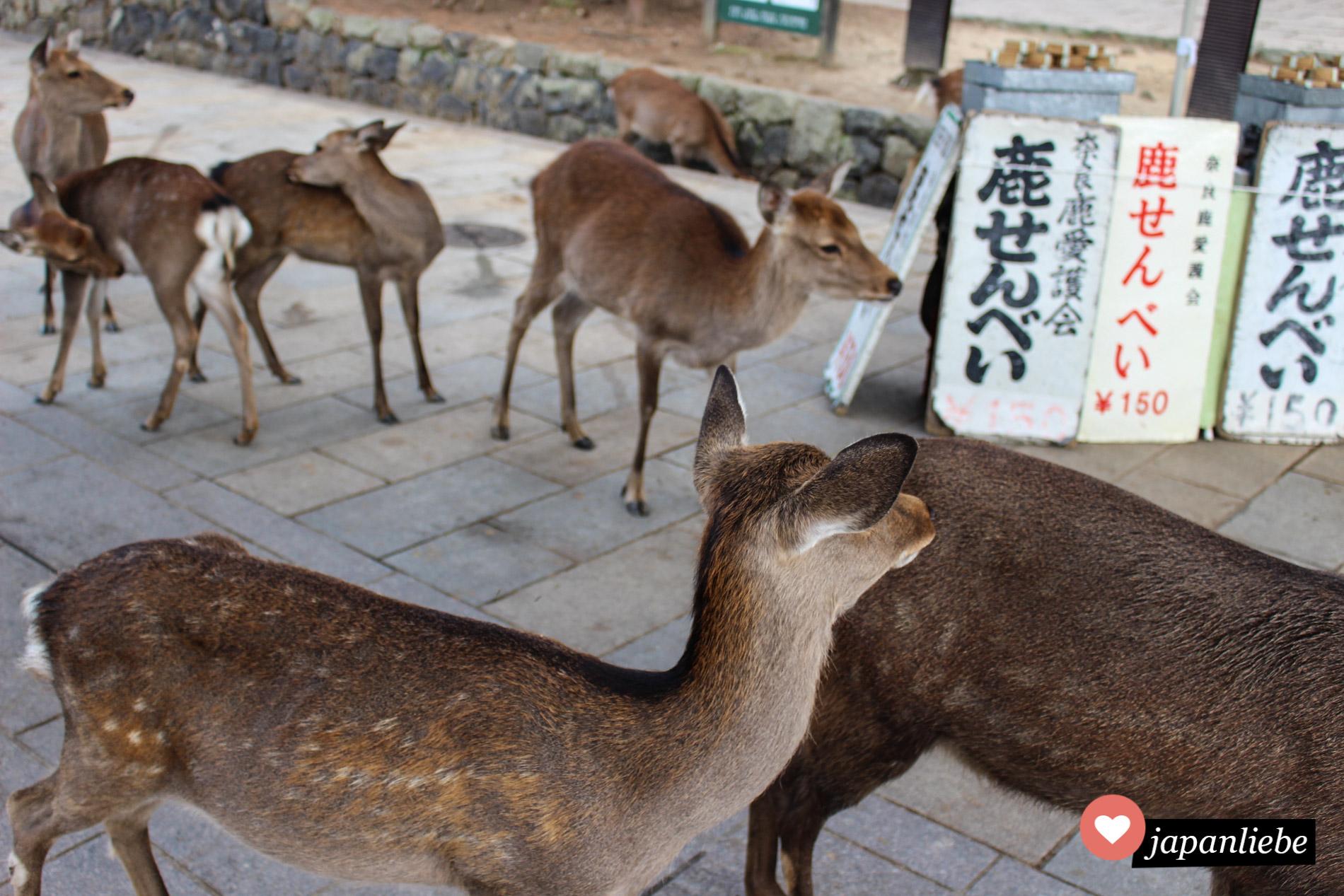 In Nara tummeln sich die Rehe um den Futter-Cracker-Stand.