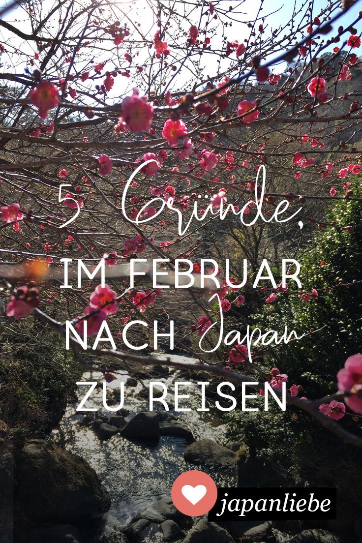 5 Gründe, im Februar nach Japan zu reisen