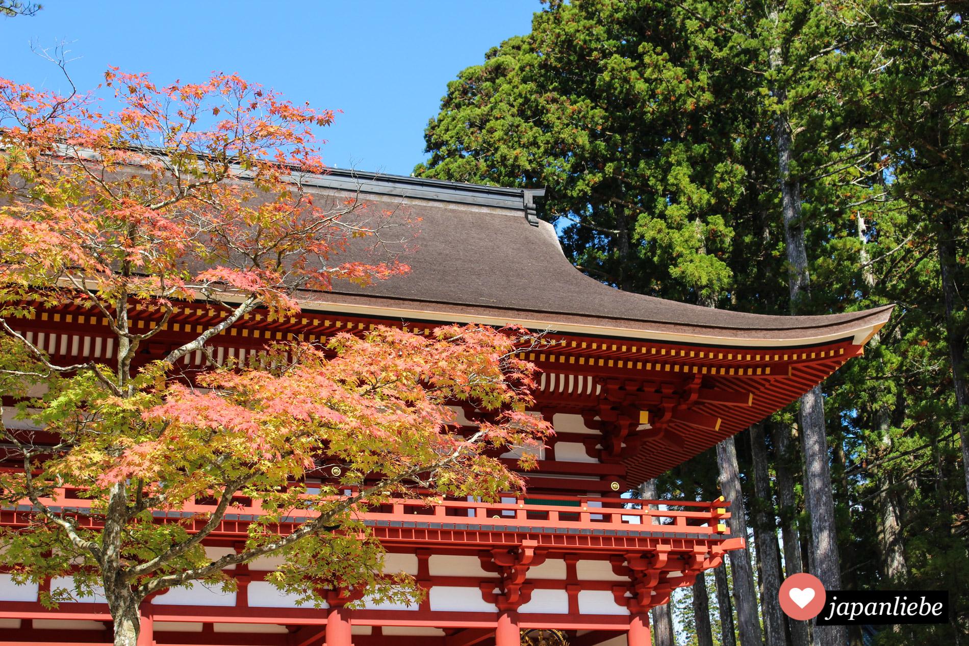 Das Daimon-Tor auf dem Kōya-san mit Herbstlaub