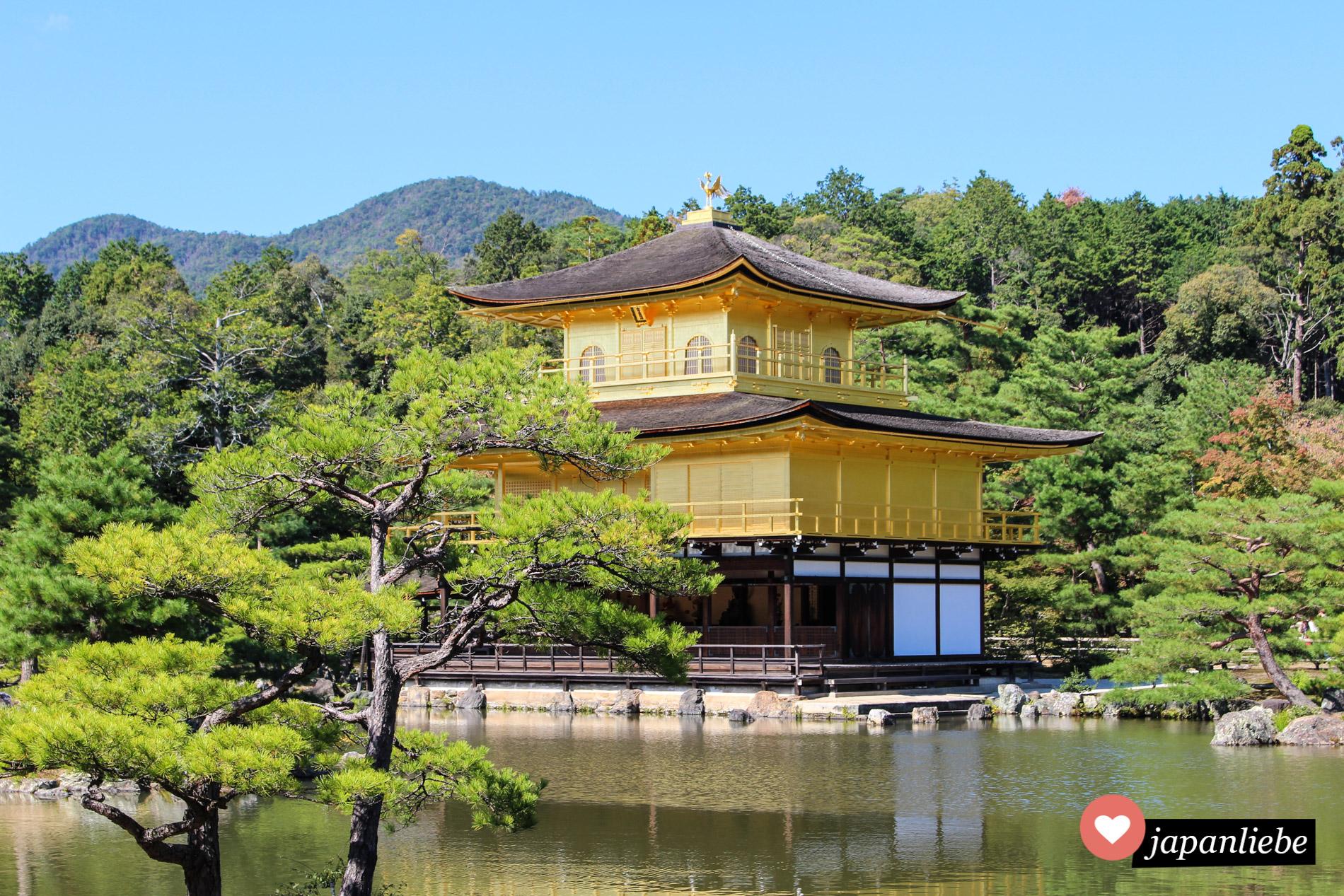 Muss man auf einer Japanreise einfach mal gesehen haben: Das goldene Pavillion (Kinkaku-ji) in Kyōto