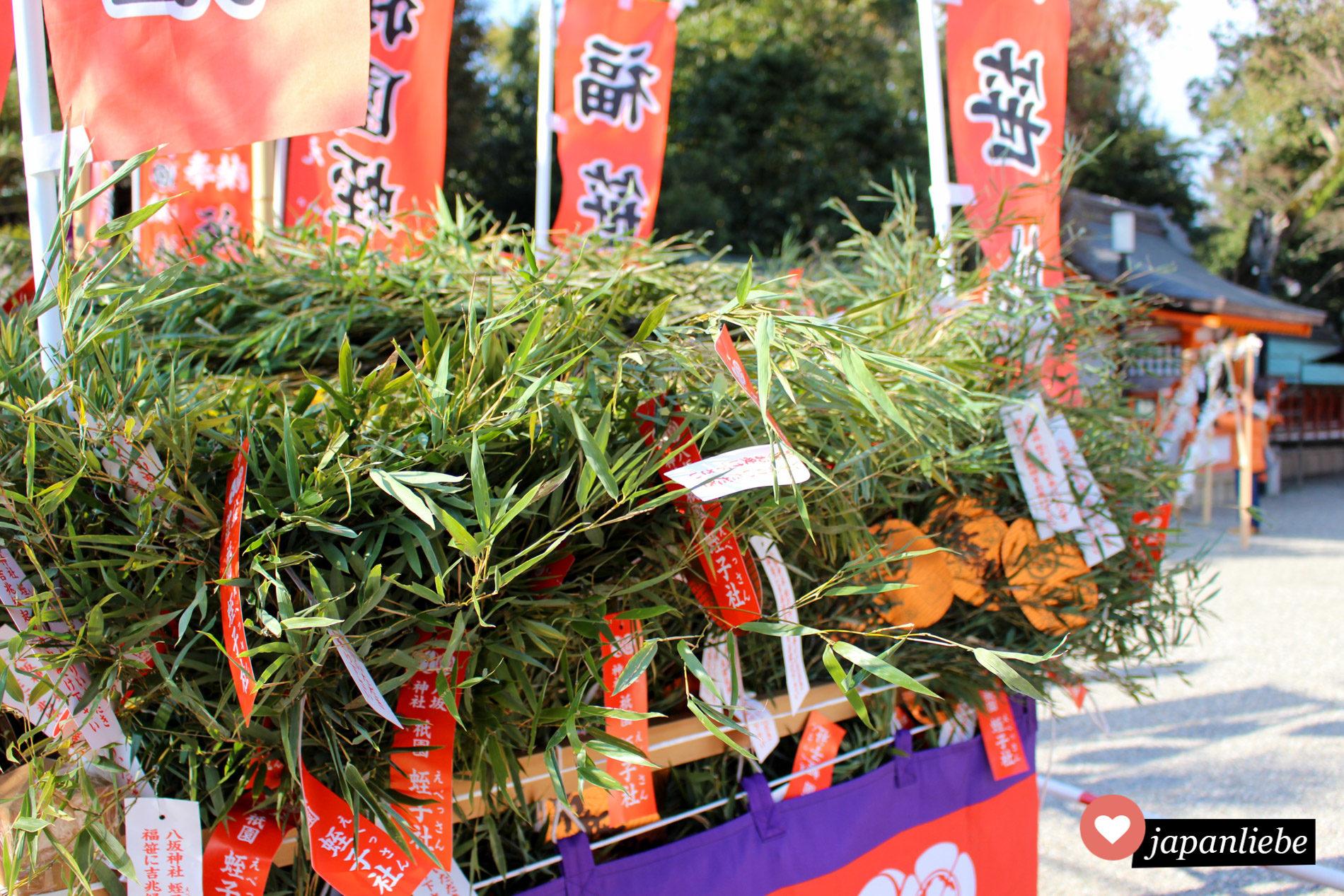 Zum Ebisu-Matsuri werden Bambuszweige mit grünen Blättern an Geschäftsleute verteilt für guten Umsatz im kommenden Jahr.