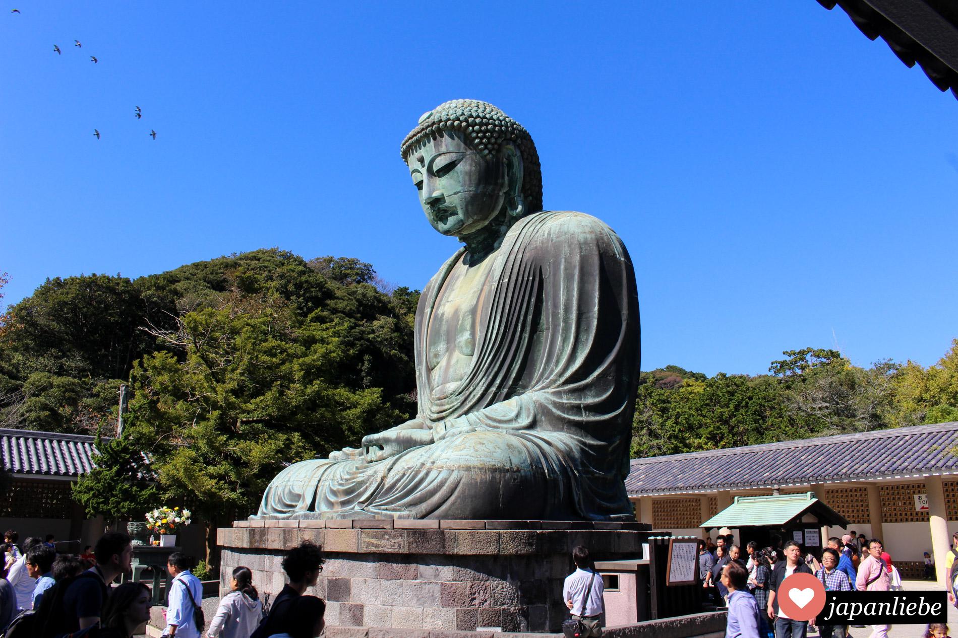 Seit Jahrhunderten sitzt die knapp über 13 Meter hohe Buddhastatue in Kamakura unverändert entspannt auf dem Gelände des Kotoku-in Tempels.
