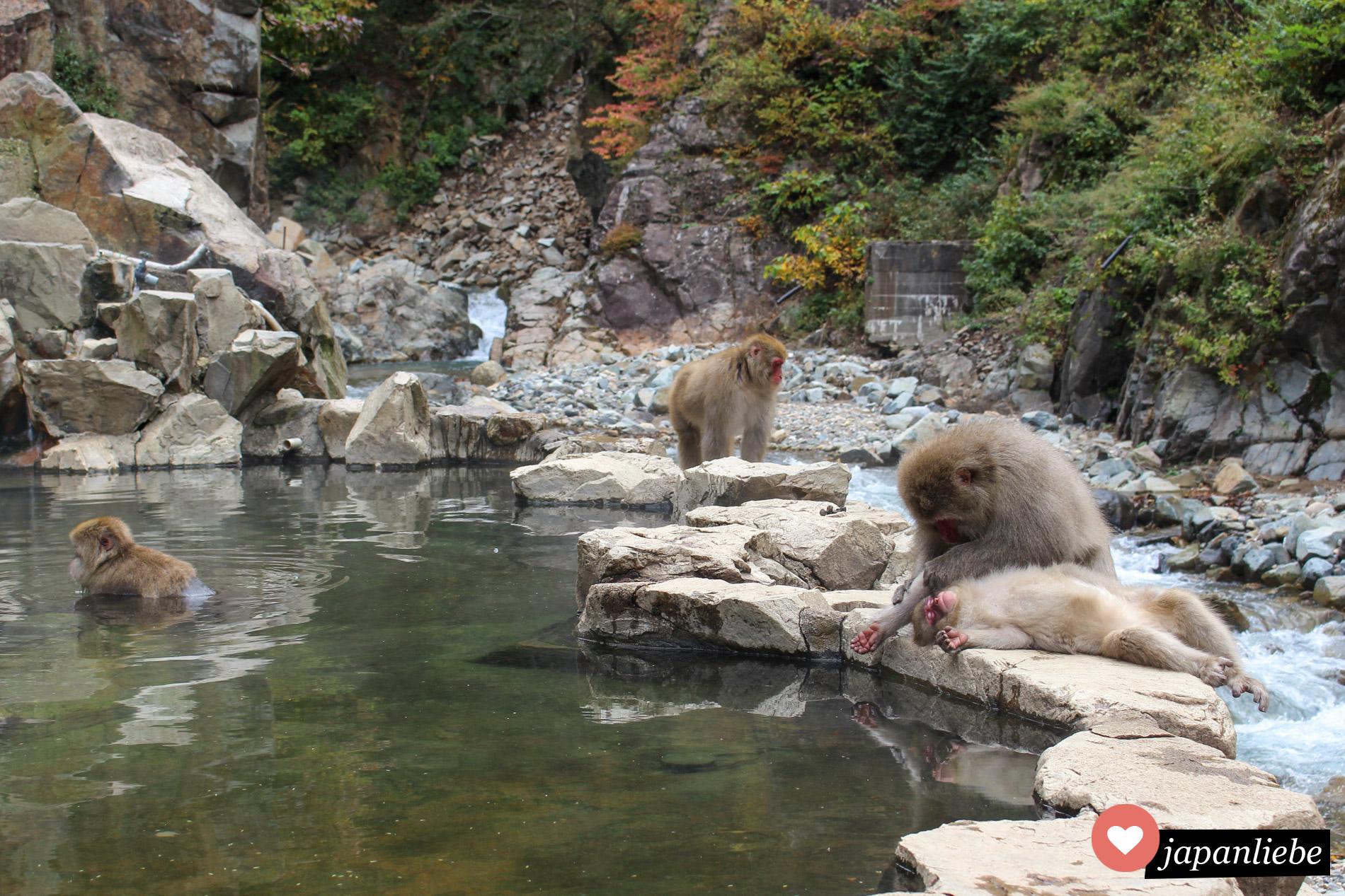 Nagano ist ein guter Ausgangspunkt für einen Ausflug in den Jigokudani Monkey Park.
