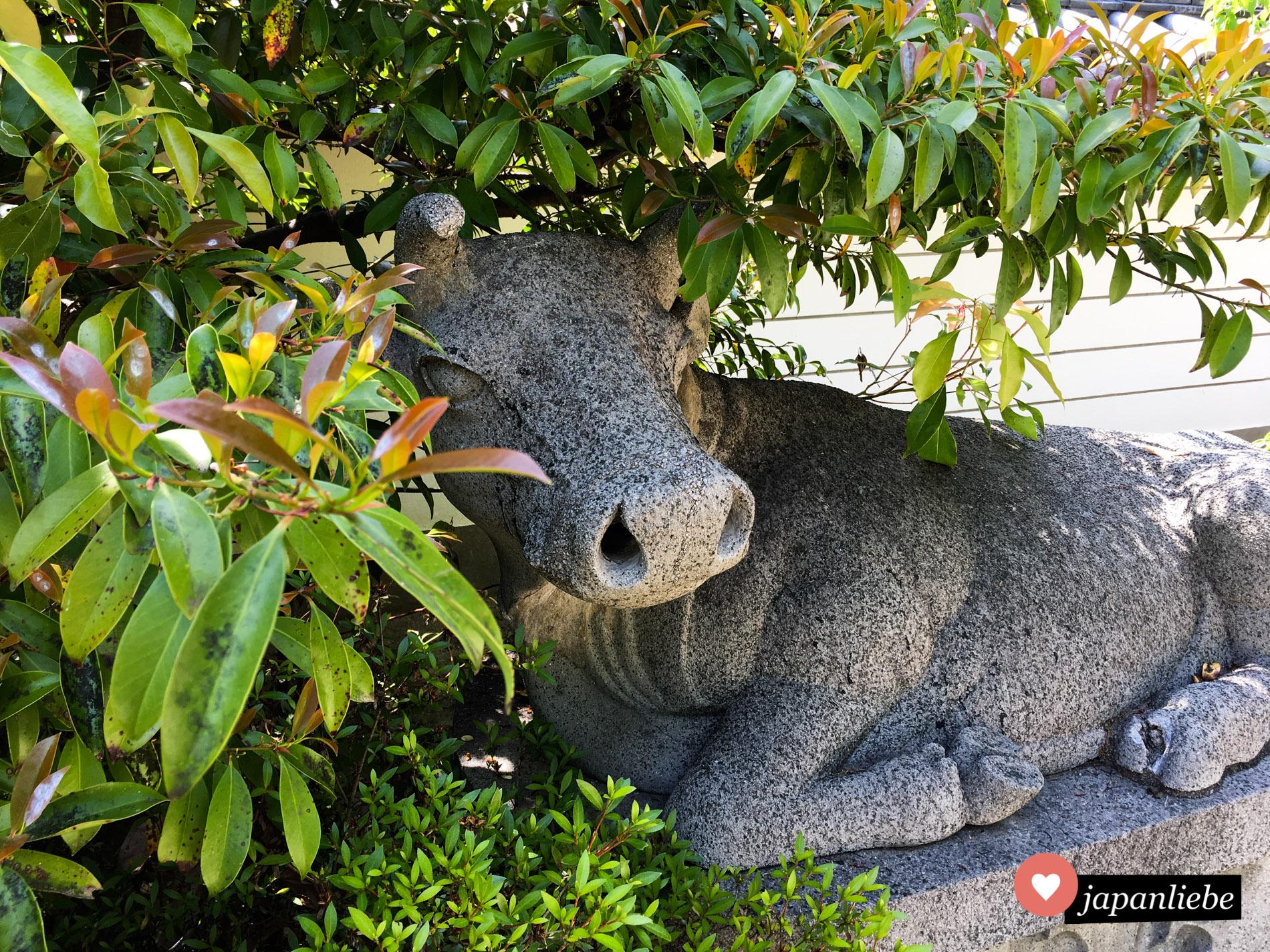 Der Legende nach streikte der Ochse beim Abtransport von Tenjins Leiche und legte sich hin. Deshalb findet man an Schreinen ihm zu ehren oft Ochsenstatuen, die Weisheit und Glück verheißen, wenn man sie berührt.