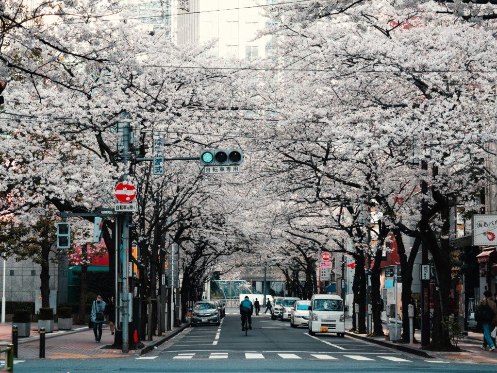 Eine Straße mit Kirschbäumen im Frühling in Tōkyō. (Foto: Agathe Marty auf Unsplash https://unsplash.com/photos/2cdvYh6ULCs)