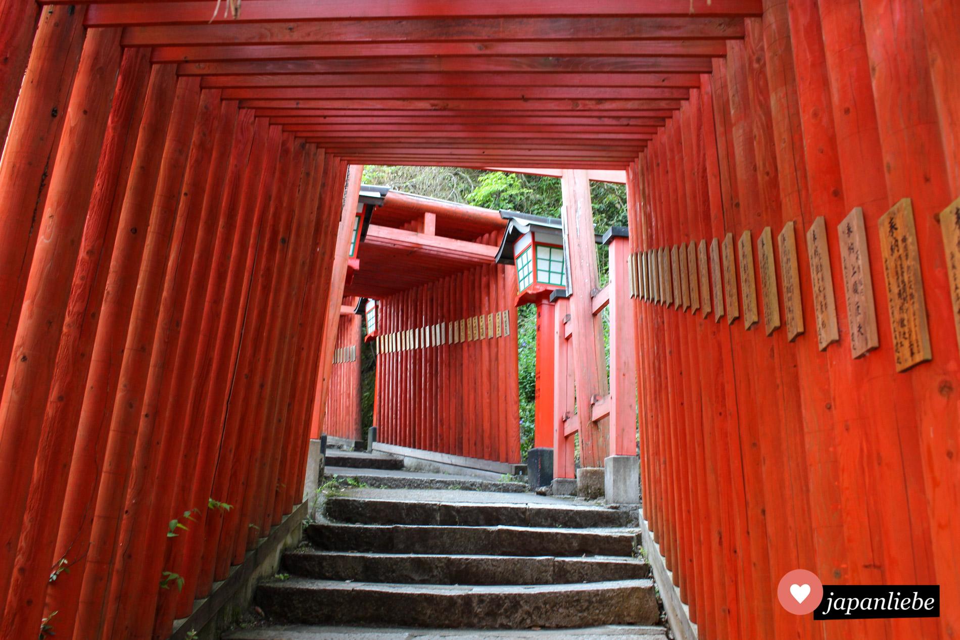 Unzählige schmale, tore Holztore säumen die Treppen hoch zum Taikodani Inari Schrein in Tsuwano.