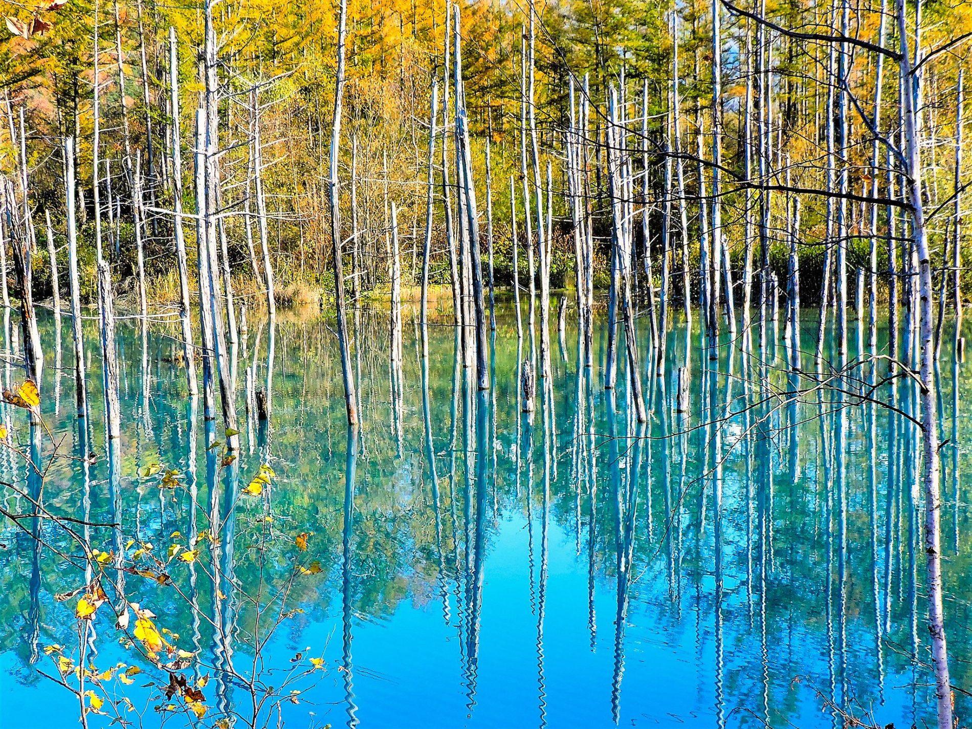 Der Blaue Teich sieht das ganze Jahr über anders aus. Besonders bezaubernd ist der Kontrast vom türkisblauen Wasser zum Gelb des Herbstlaubs.