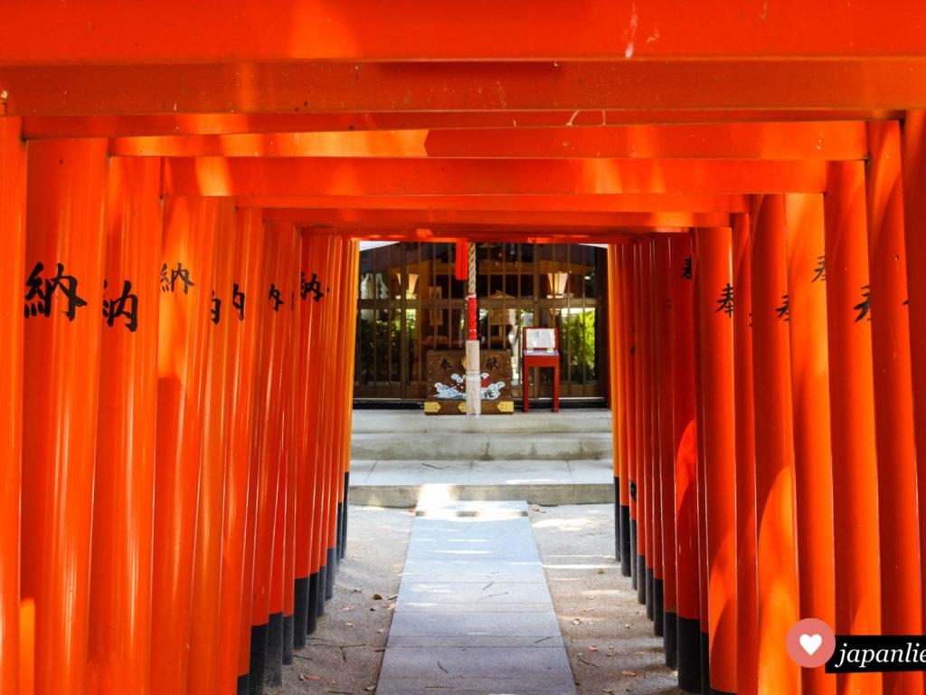 Eine Reihe roter torii führt am Kushida Schrein in Fukuoka zur Spendenbox.