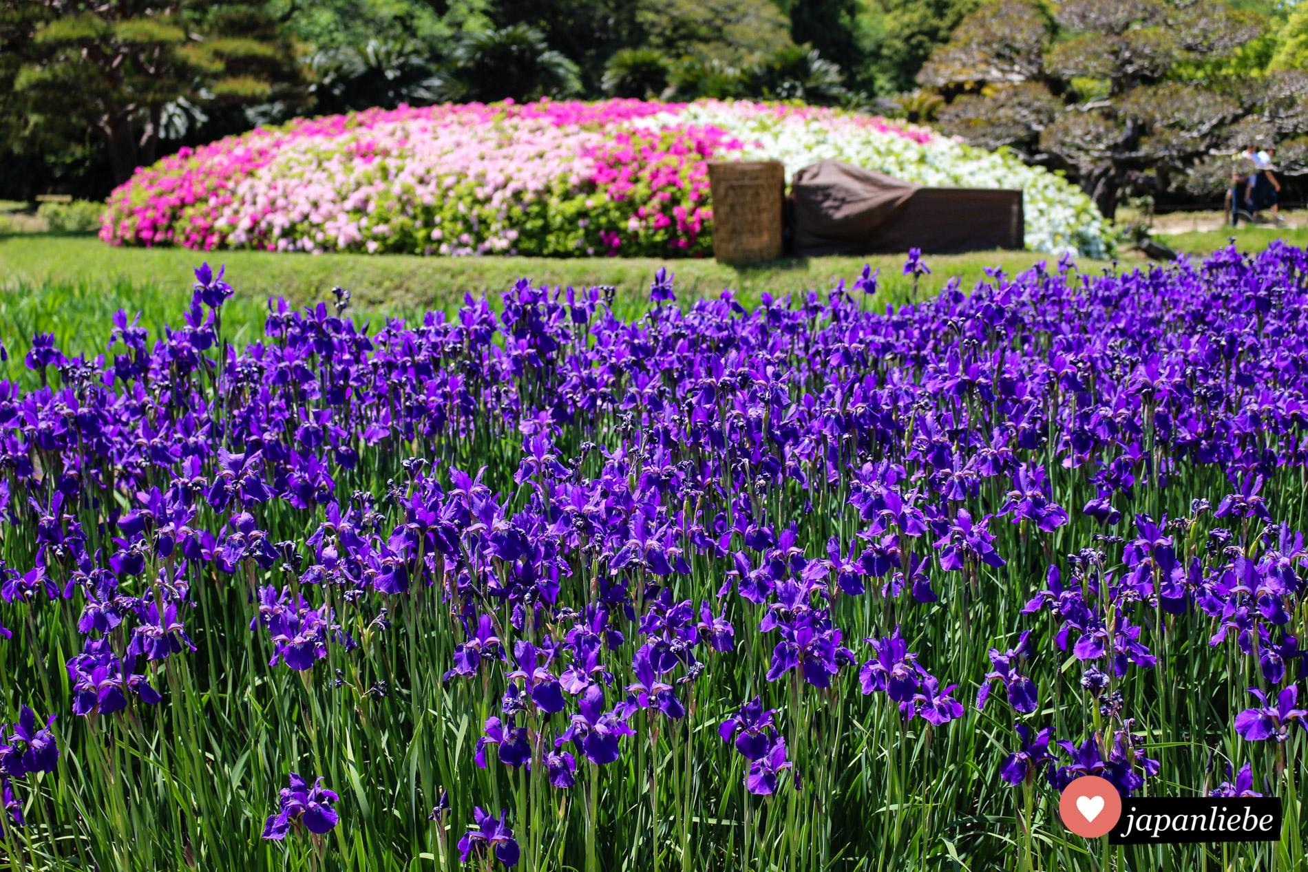 Der Kōraku-en Garten in Okayama ist für seine vielfältige Blütenpracht bekannt.