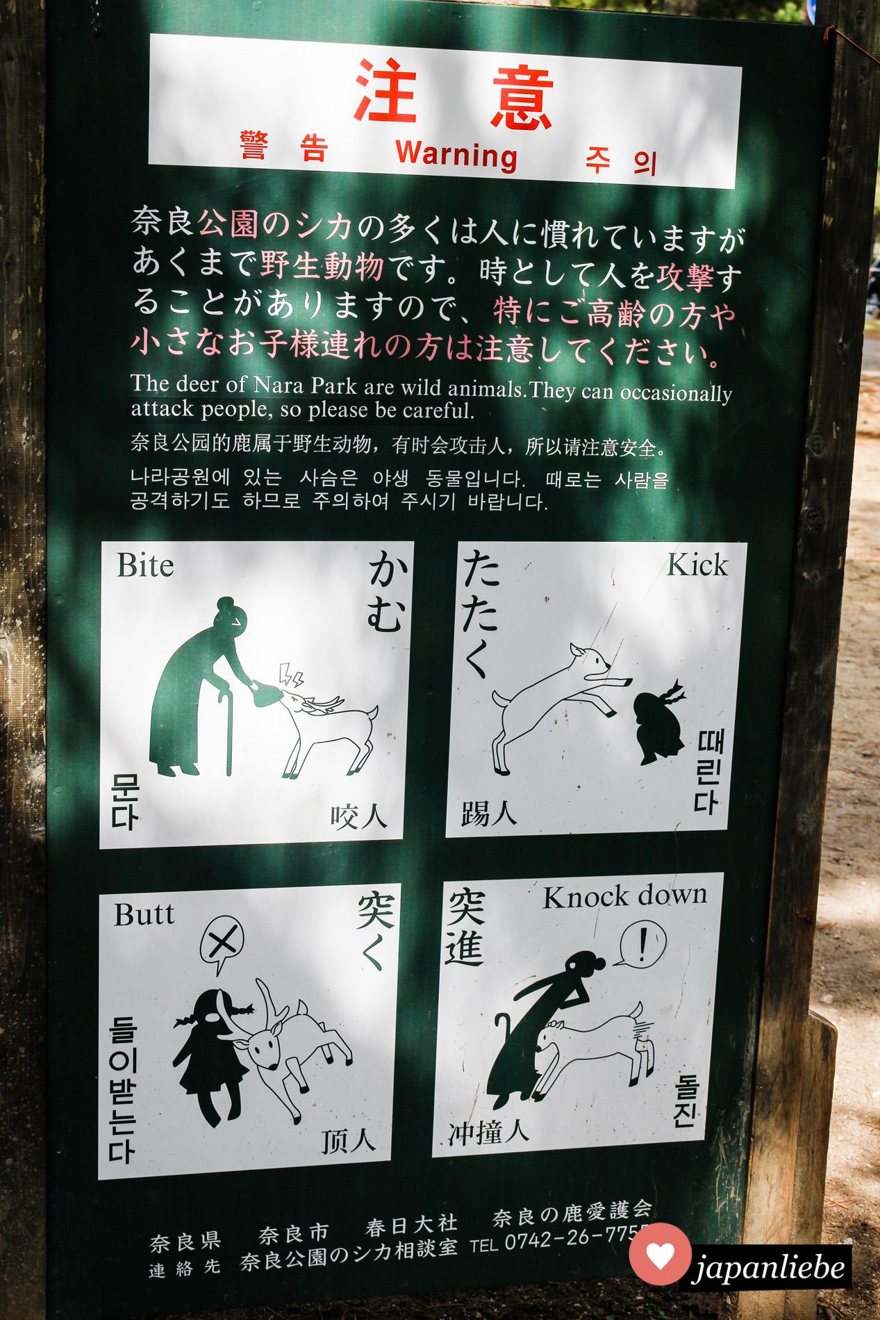 Naras Hirsche sind zutraulich, wenn es um Futter geht. Sonst vergessen aber zu viele Touristen gern, dass es sich doch um wilde Tiere handelt.