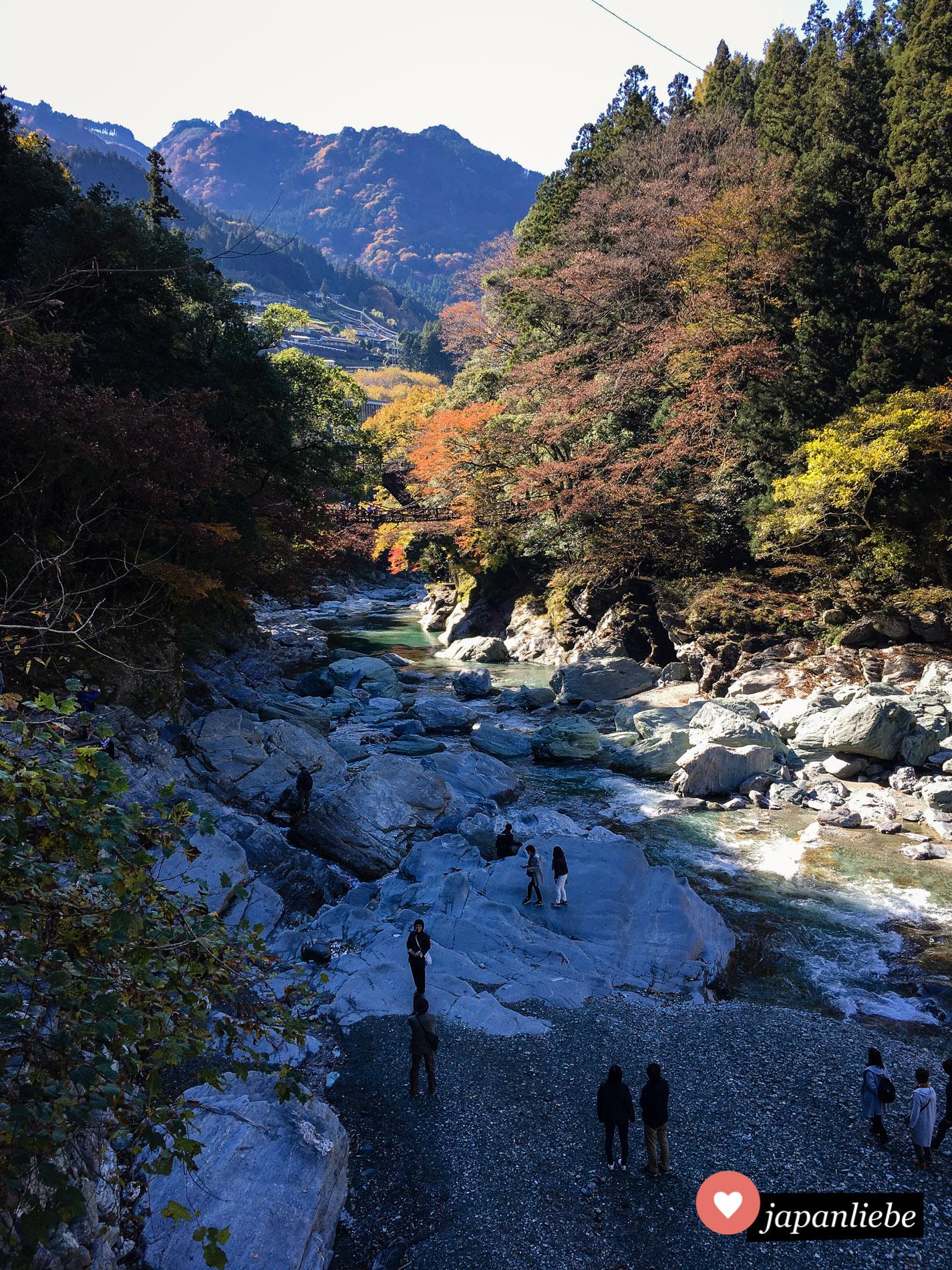 Vor allem im Herbst, wenn Japans Herbstlaub leuchtet, ist es im Iya-Tal besonders schön.