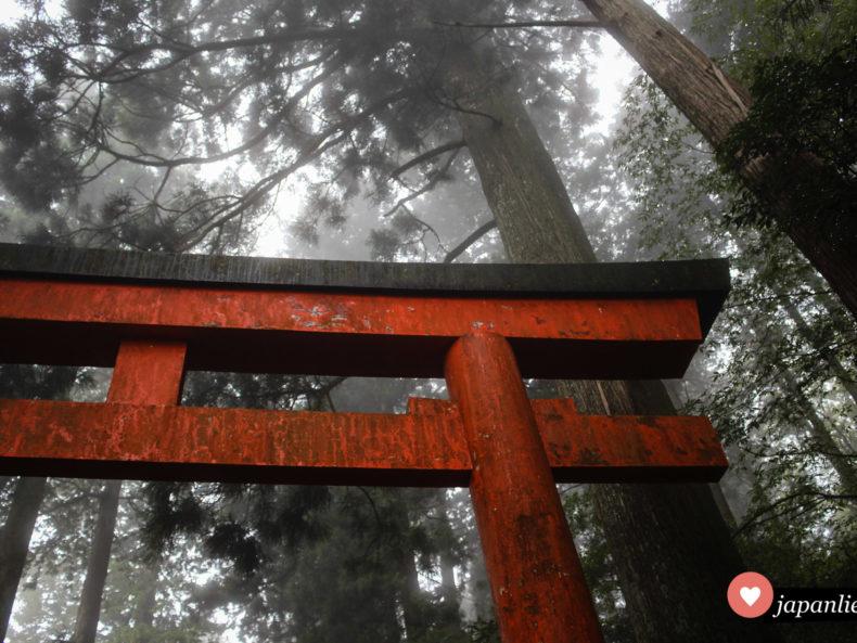 Das Schreintor des Hakone-Schreins in dichtem Nebel.
