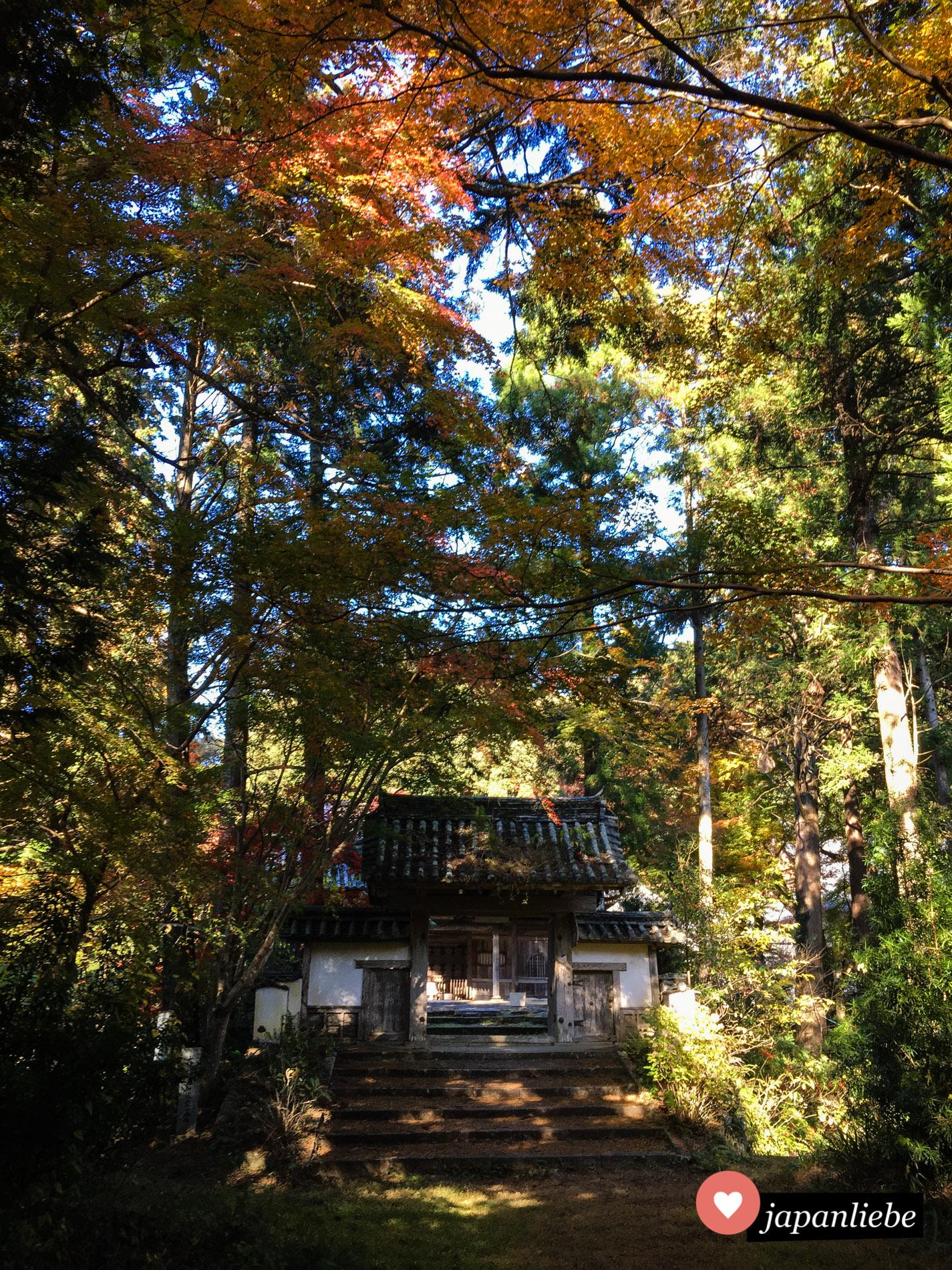 Der Aufstieg zum Nyoho-ji Tempel in Ozu ist bei Sonnenschein und Herbstlaub wirklich magisch.