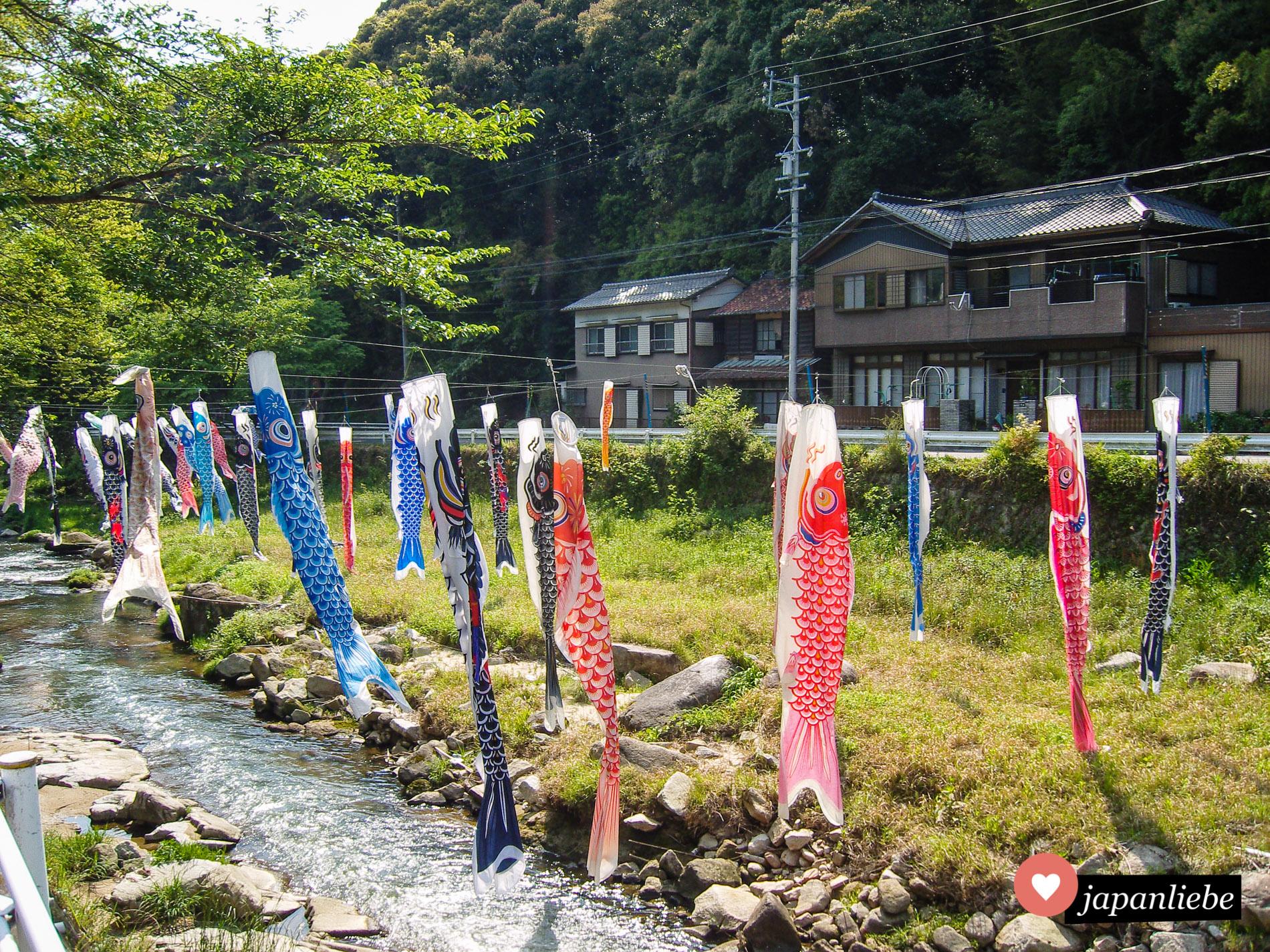 Auch in Okzaki, wo ich neun Monate gelebt habe, werden Karpfen zum Kinderfest aufgehängt und verschönern so einen Fluss.