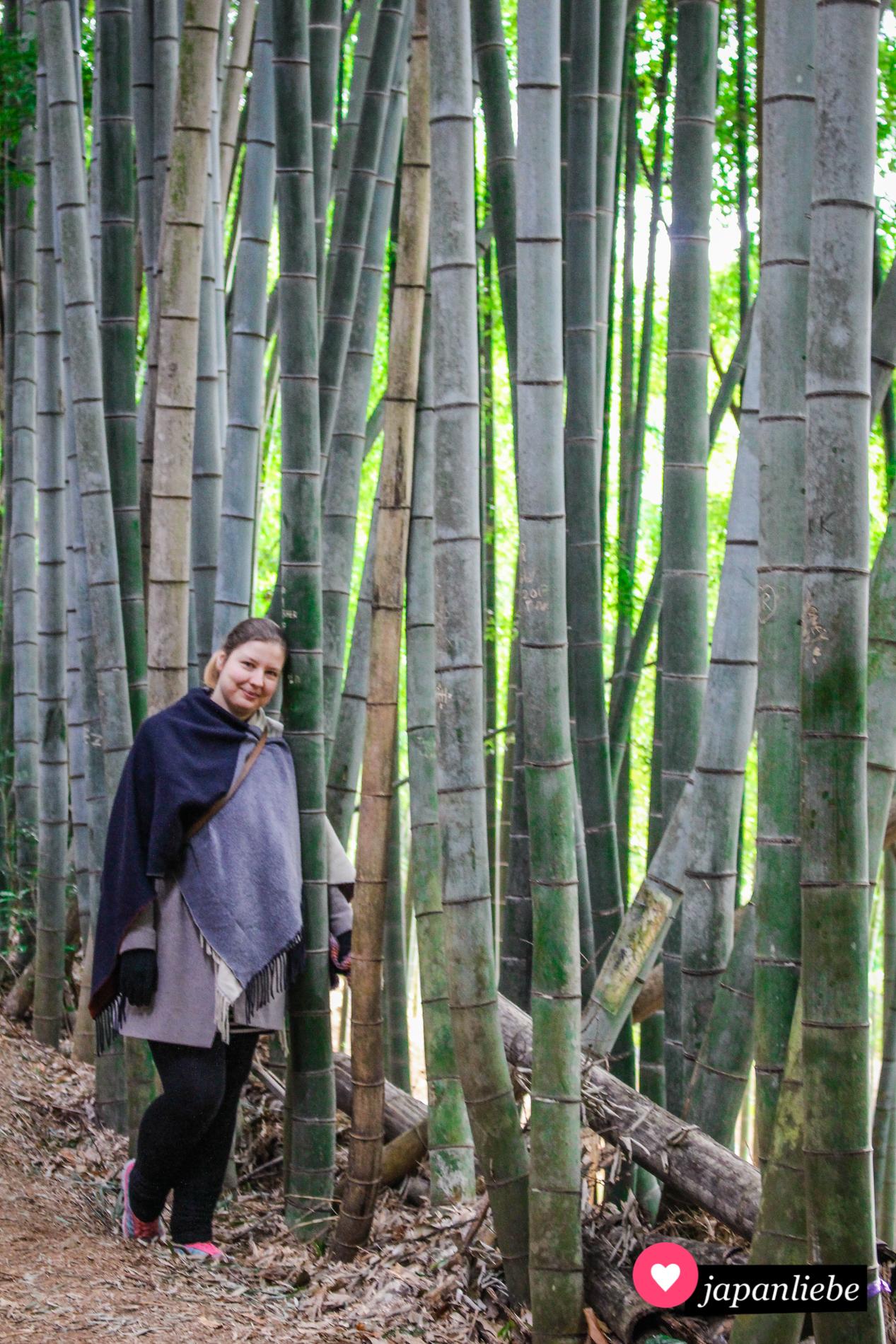 Das kleine Bambuswäldchen am Hang des Berg Inari hatte ich ganz für mich allein.